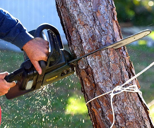 Спил деревьев в Пензе и Пензенской области