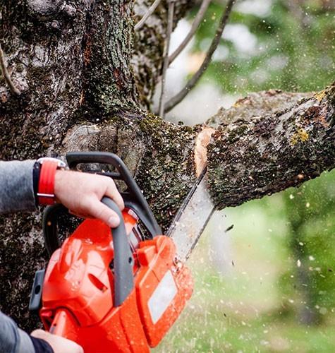 Услуга по спиливанию деревьев в Пензе